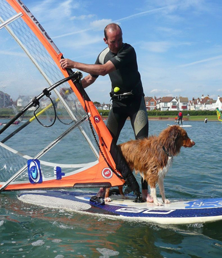 Windsurfing dog