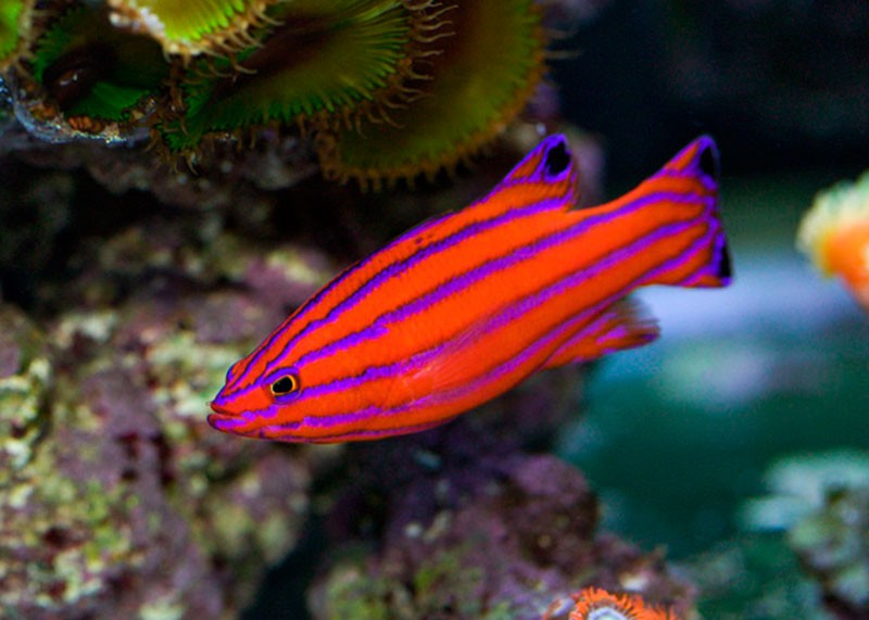 World s most expensive tropical fish part 1 for Most expensive saltwater fish