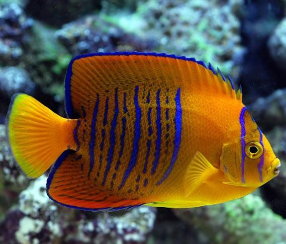 World S Most Expensive Tropical Fish Part 1